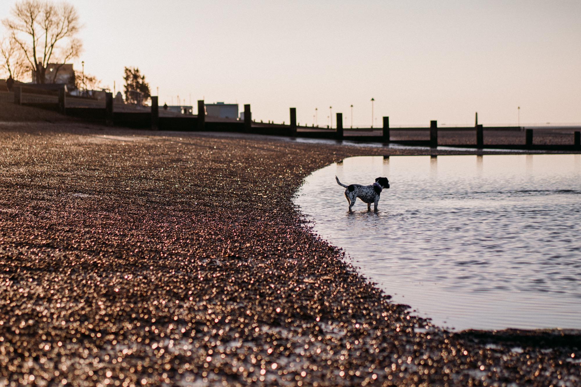 wednesday-dog-leighonsea-18