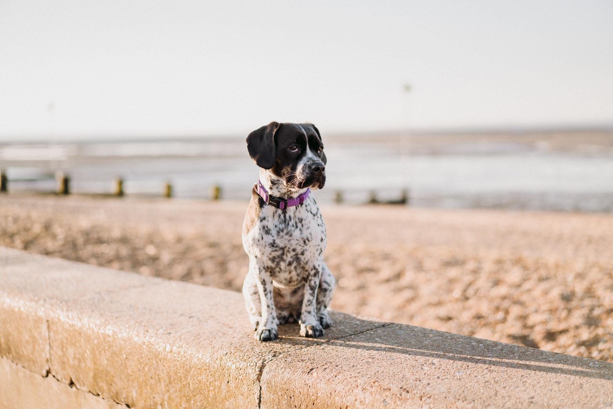 wednesday-dog-leighonsea-8